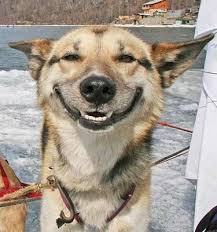 dog happy image