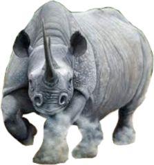 Rhino Left Facing New